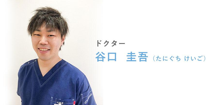 谷口 圭吾(たにぐち けいご)